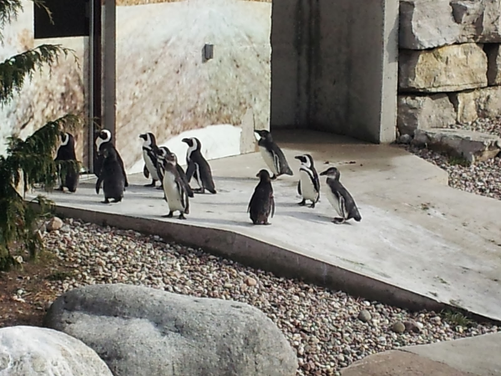penguins, zoo, Toronto Zoo