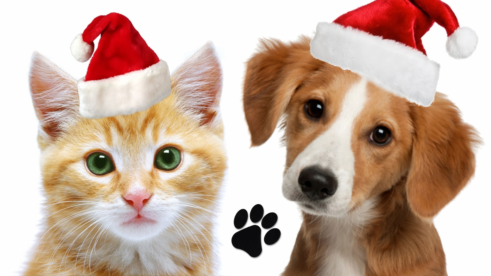 Christmas Cat And Dog Wallpaper Traffic Club