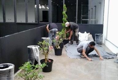 paisagismo studioboop; jardim estudio boop