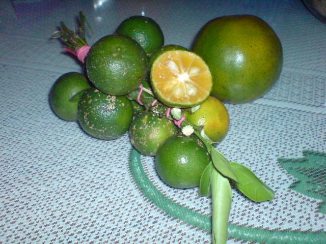 download-gambar-jeruk-sambal-jpg