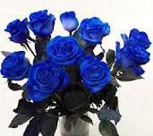 gambar_mawar_biru_dalam_pot