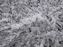 Ett virrvarr av grenar och snö, januari 2014
