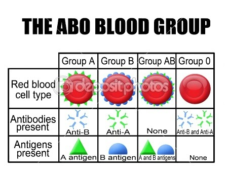 abo blood system and malarial infections essay Prevalence of malaria infection and abo human blood group in dar-es-salaam, tanzania  most humans belong to the abo blood group system which consists of four major blood groups and eight.