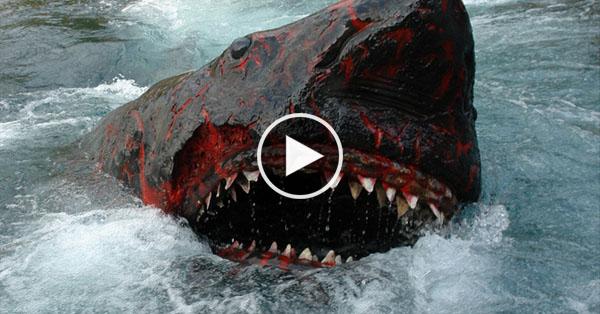 Rare Shark Found Inside An Active Underwater Volcano ... Pacific Ocean Underwater Volcanoes