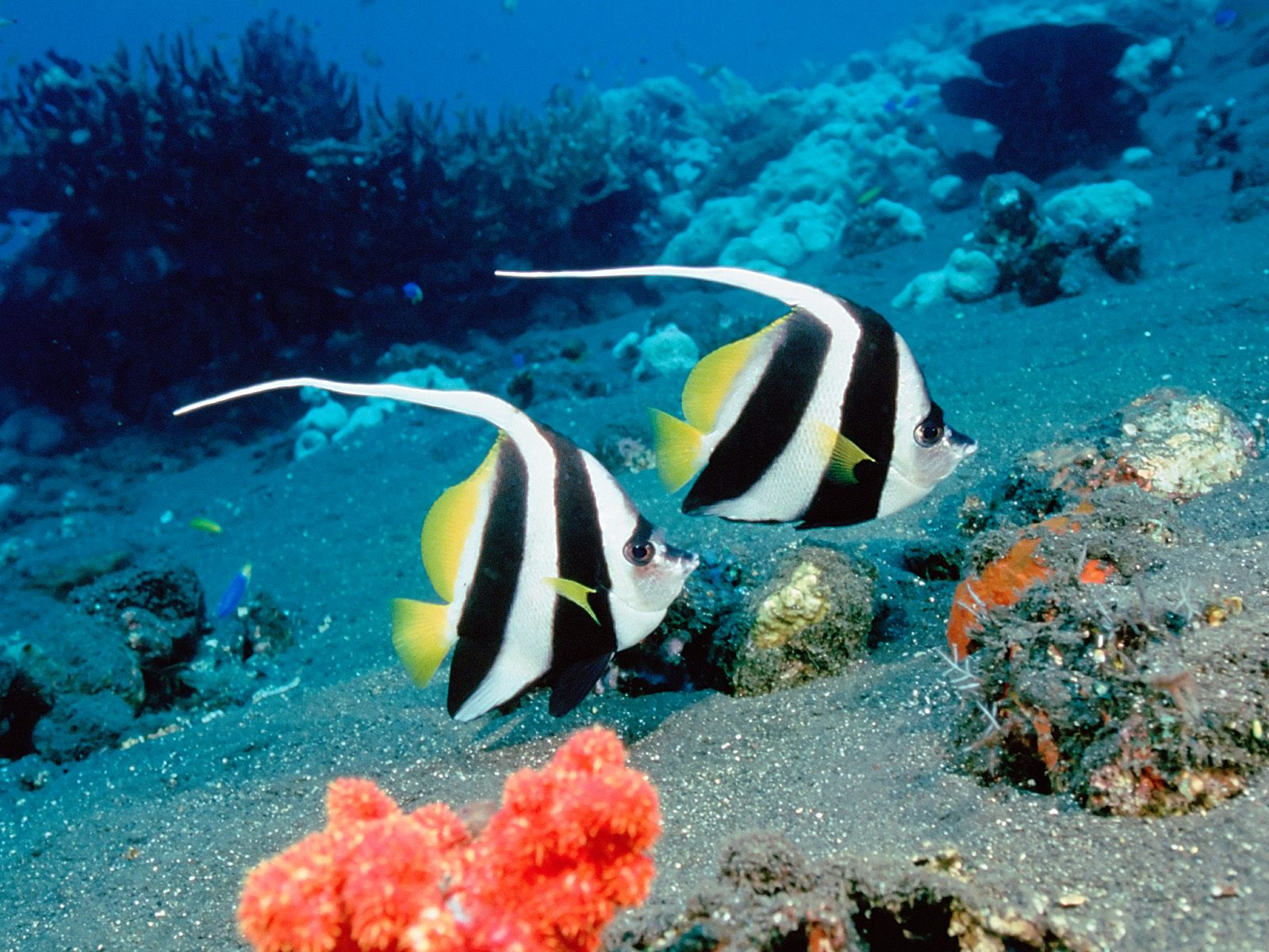 http://1.bp.blogspot.com/-tKzU7BKS9WI/T7QIIyM5vVI/AAAAAAAADik/zwrozAw5_60/s1600/Fish-HD-Wallpaper-01.jpg