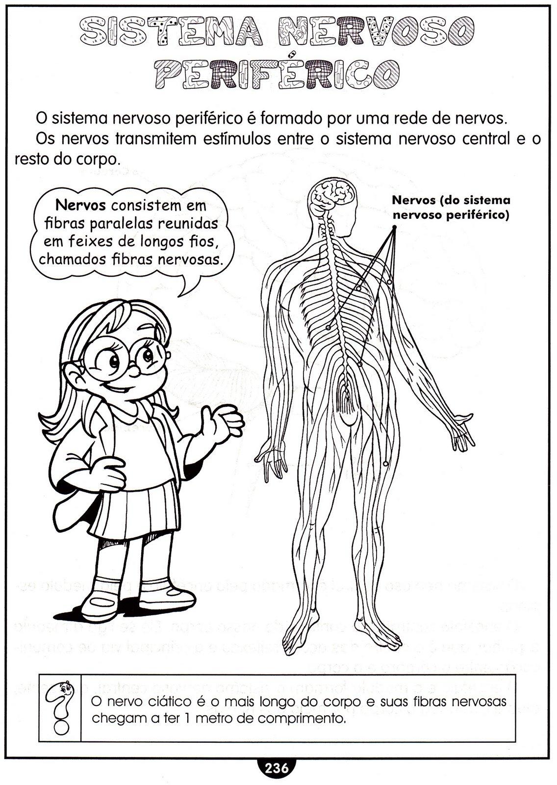 Amado CLUBE DA COR ATIVIDADES ESCOLARES : ATIVIDADES DE CIÊNCIAS SISTEMA  BS28