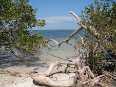A Florida view.