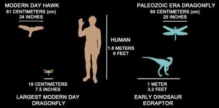 Fakta Unik Tentang Capung