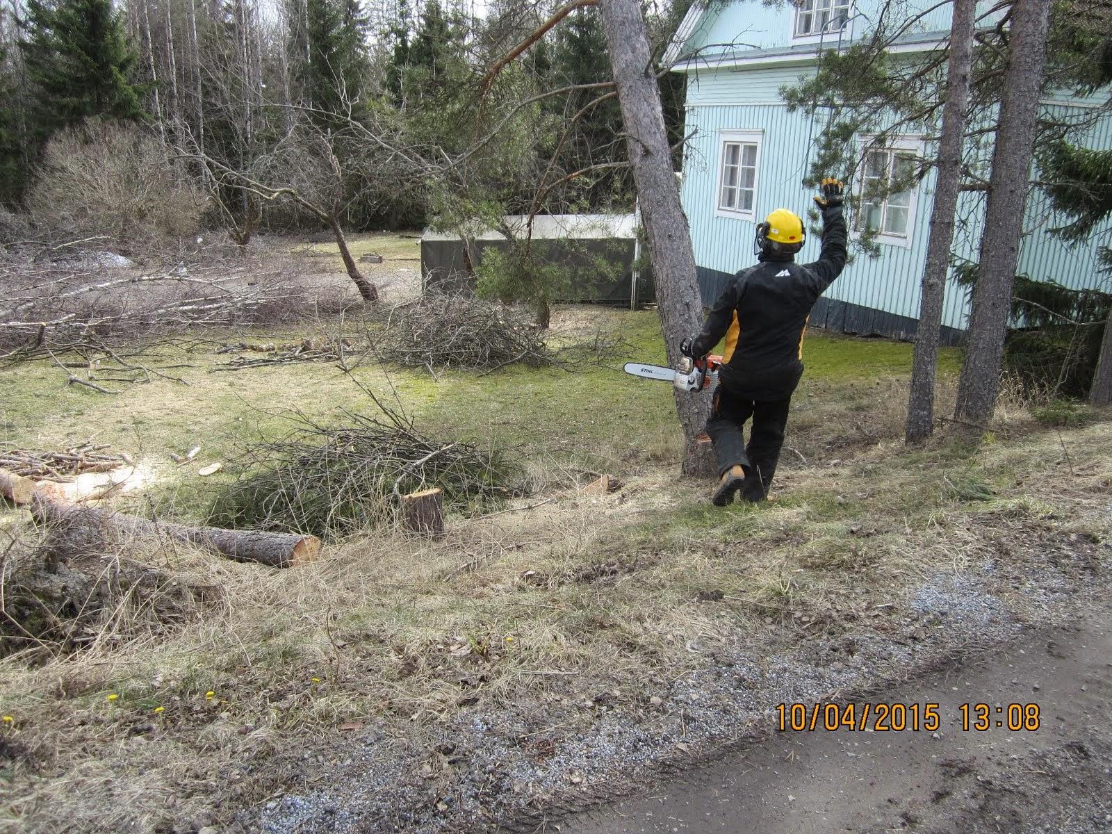 Koivujen mäntyjen pihapuiden kaadot Pirkanmaalla käteisellä kotitalousvähennysmahdollisuus