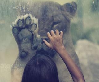 amor de animal