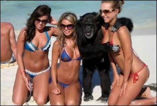 Funny Monkey And Girls