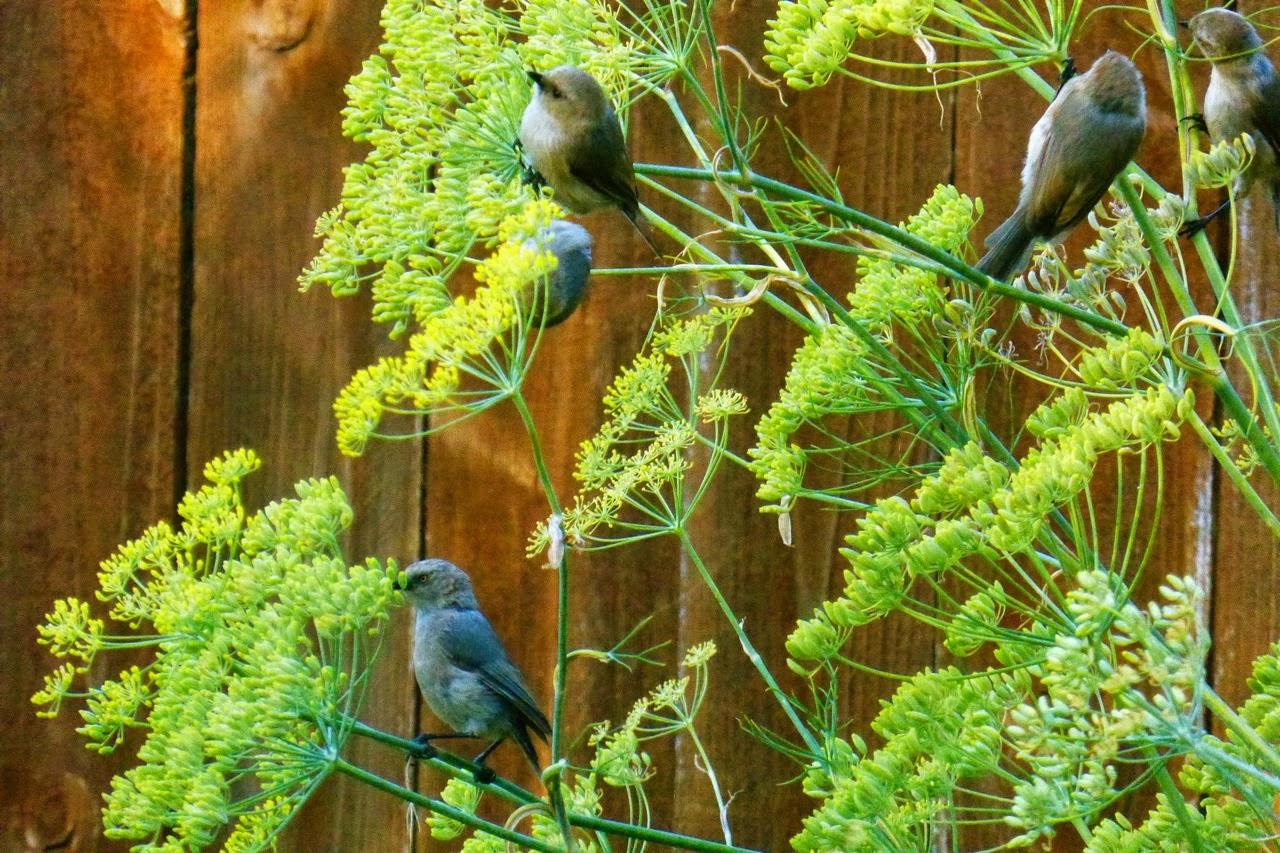 Eugene, Oregon, garden, autumn, fall, Under The Plum Blossom Tree, birds