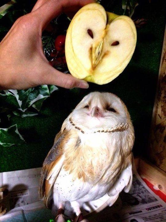 Buah Apel berbentuk wajah Burung Kakaktua