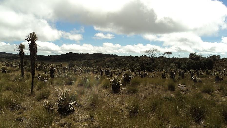 Los Ecosistemas de Colombia