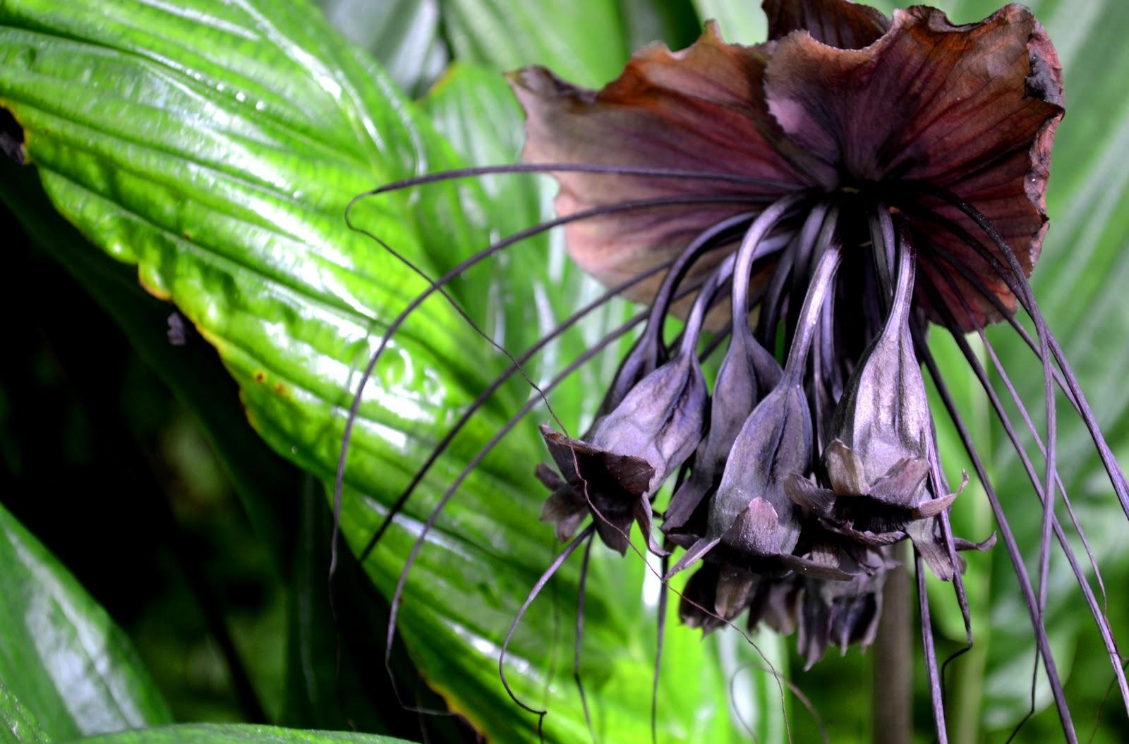 Dot s Blog Bat Flower