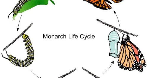 daur+hidup+kupu kupu - Jenis Daur Hidup Kupu Kupu