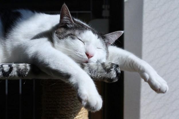 gambar kucing tidur