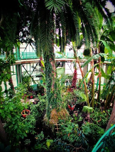 sera gradina botanica iasi