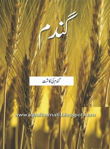 Gandam ki kasht (Cultivation of wheat) In Urdu