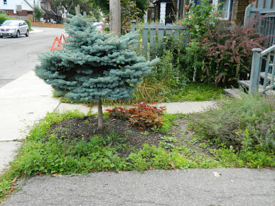Leslieville front garden cleanup before Toronto Paul Jung Gardening Services