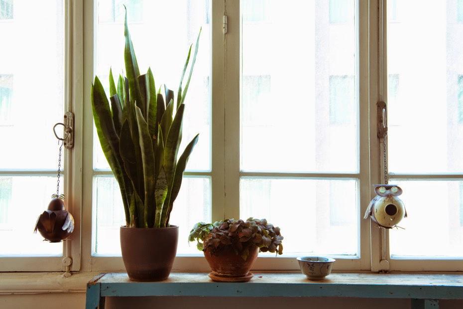 jurianne matter freunde von freunden. Black Bedroom Furniture Sets. Home Design Ideas
