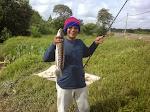 Ikan Toman Sg Langat, Olak Lempit