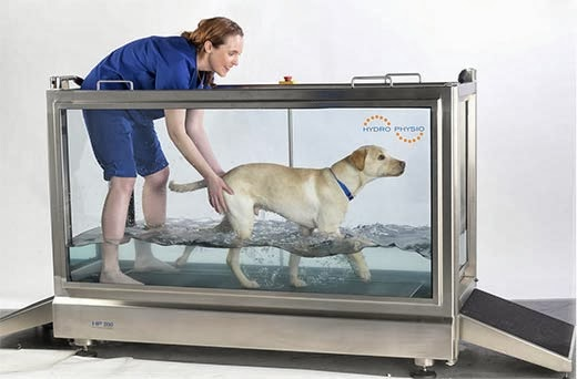 Pet Treadmill For Dogs Uk