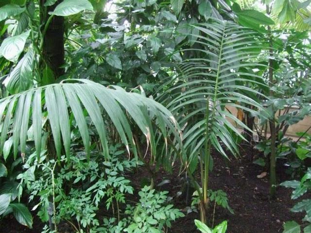 Palm House, Kew Gardens London