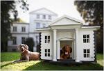 Casa de cachorro rico