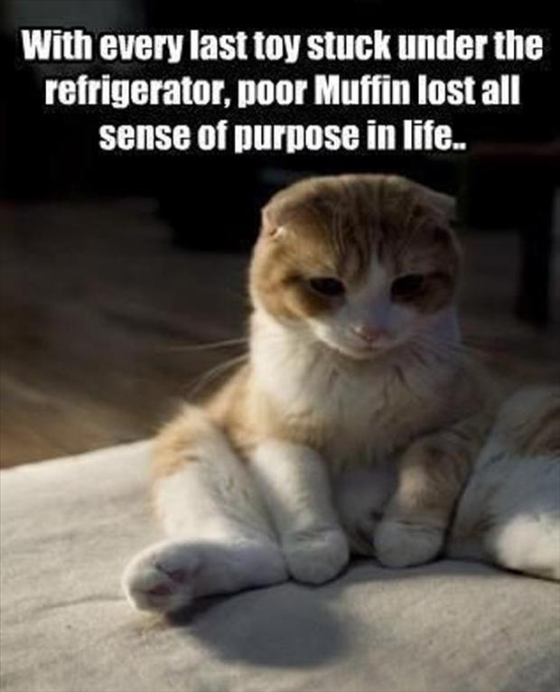 animal pictures with captions, lolcats