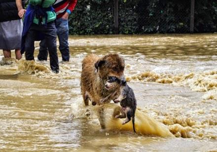 Jammu-and-Kasmir-Floods