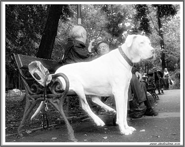 studioslera.com perro banco viejos