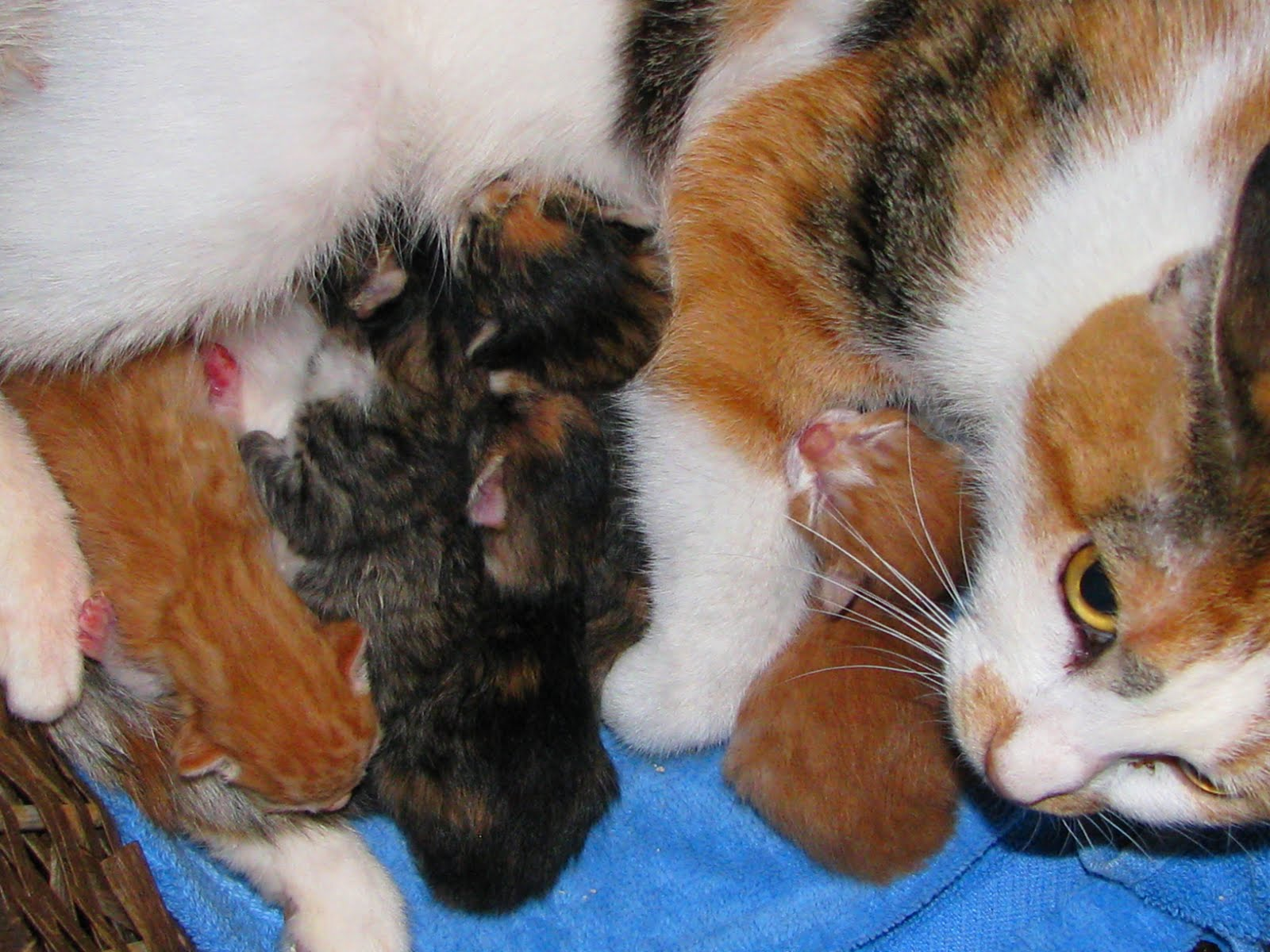 female cat names calico