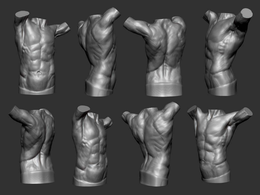female torso reference