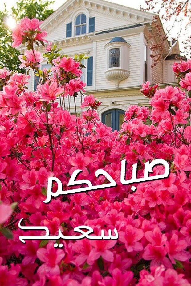ثور صباحكم سعيد