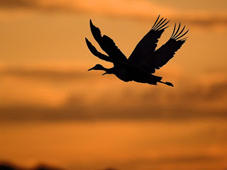 Những cặp đôi chim tuyệt đẹp