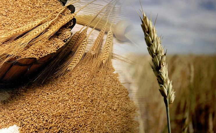 Agricultura de cereales