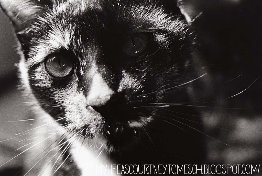 Black and White Photography Katana Black Cat