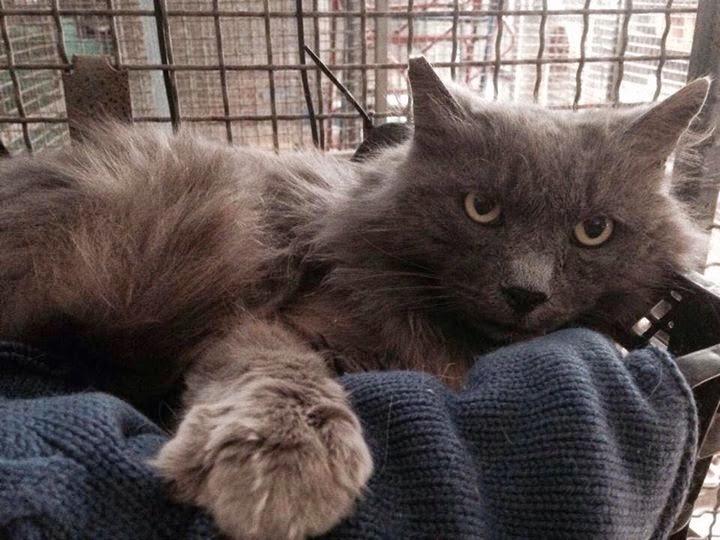 Raid nel gattile di follonica gatto ucciso a bastonate