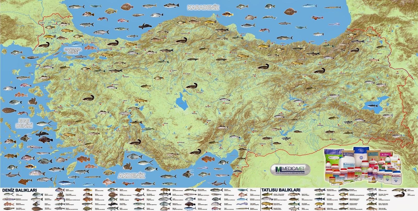 Türkiye Tatlı Su ve Deniz Balıkları Haritası