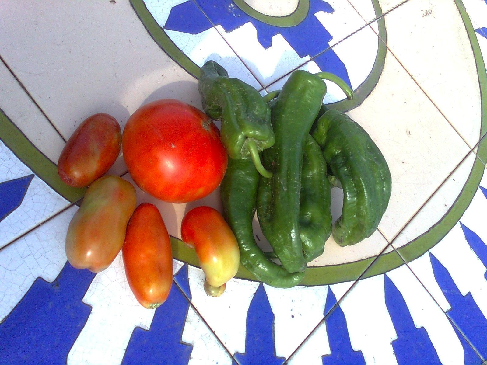 Diario de un campesino primeros pimientos y tomates for Plantar pimientos y tomates