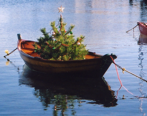 Nantucket Christmas tree in a boat