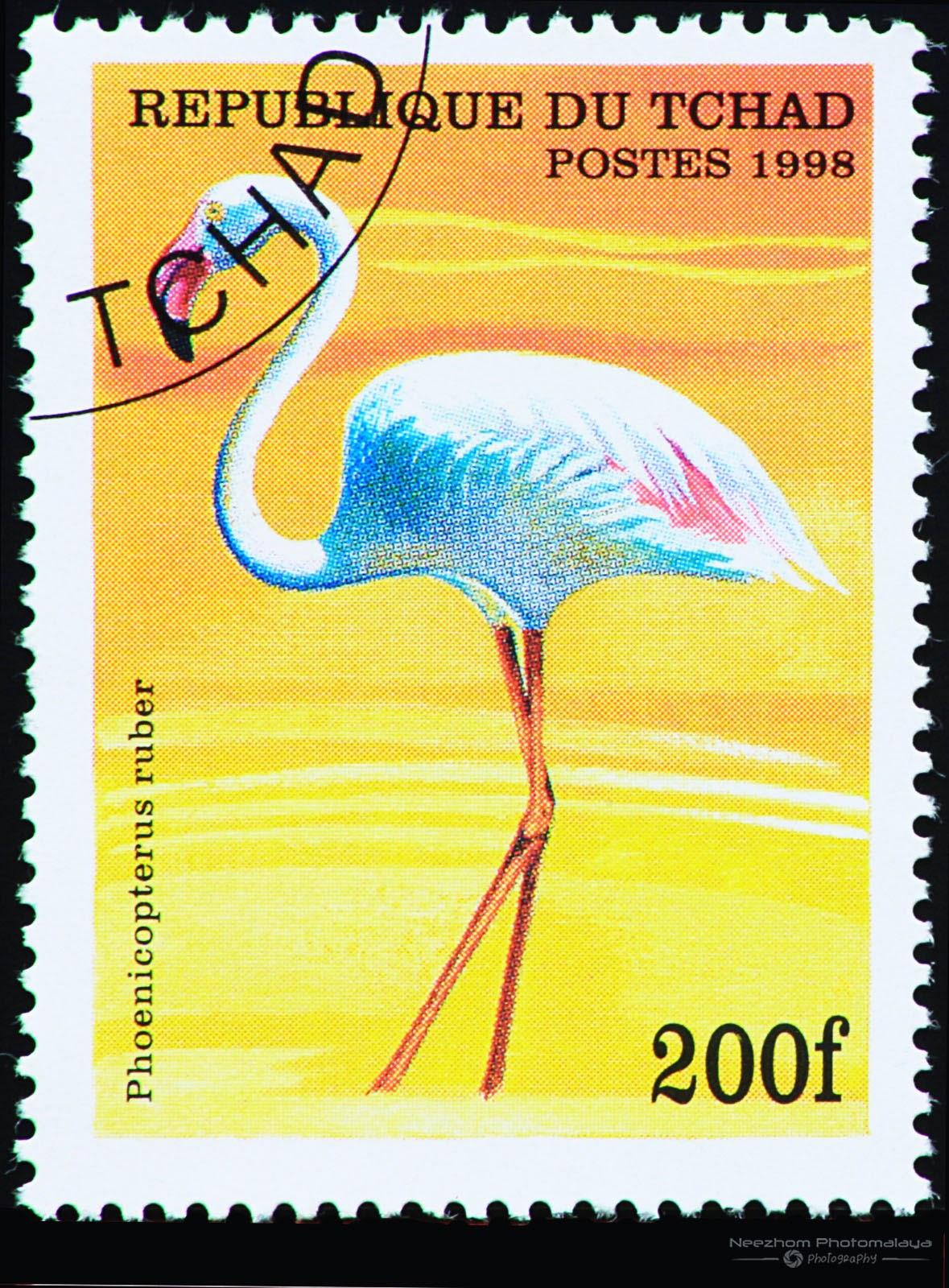 Chad 1998 Birds stamp - American Flamingo (Phoenicopterus ruber) 200 f