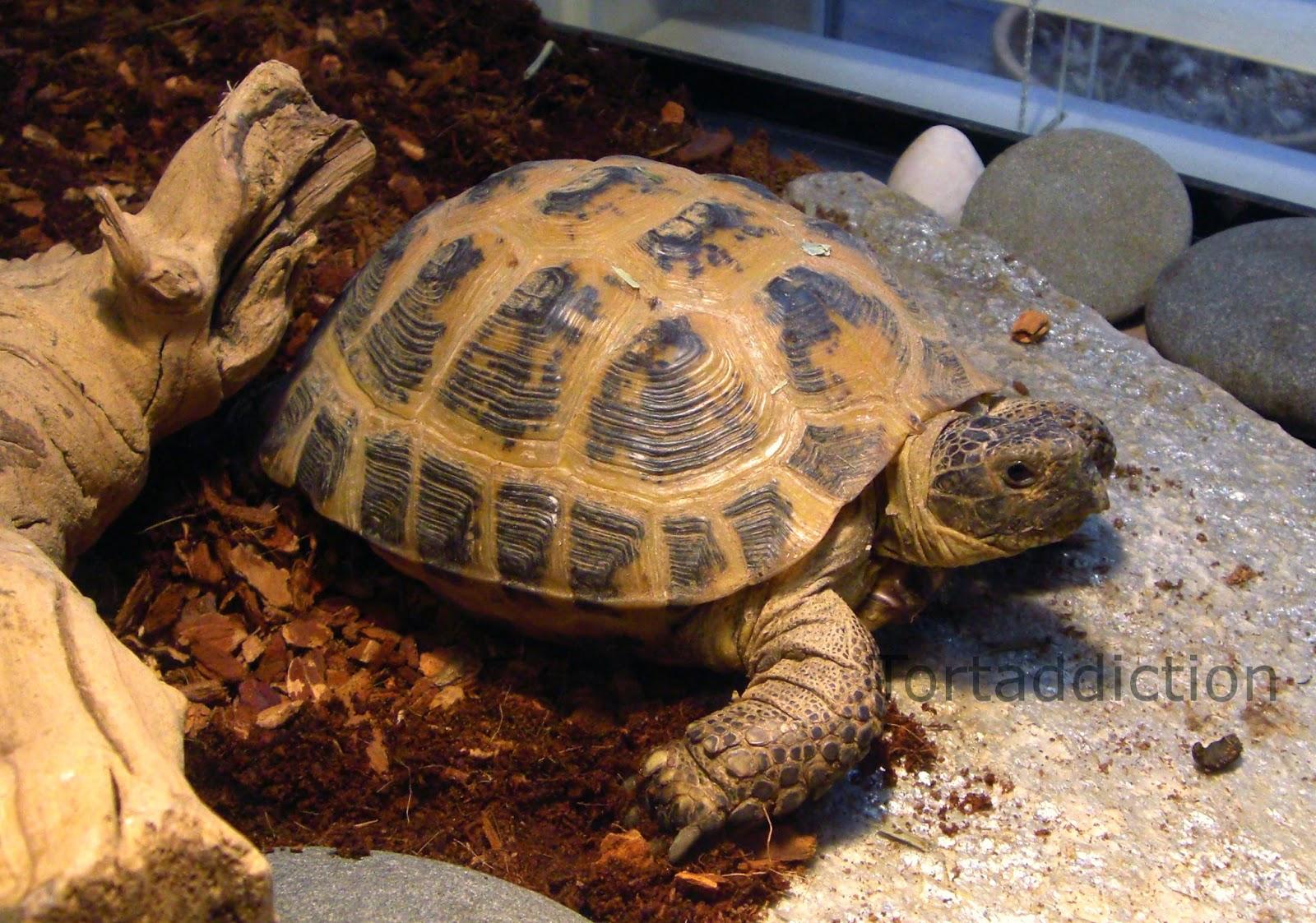 От чего умирают черепахи в домашних условиях
