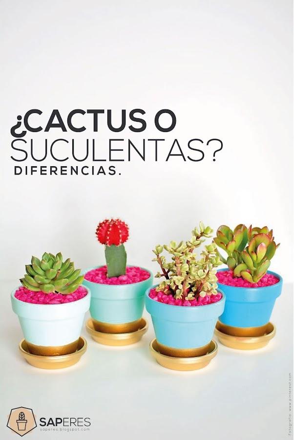 Crasulaceas for Curso cactus y suculentas