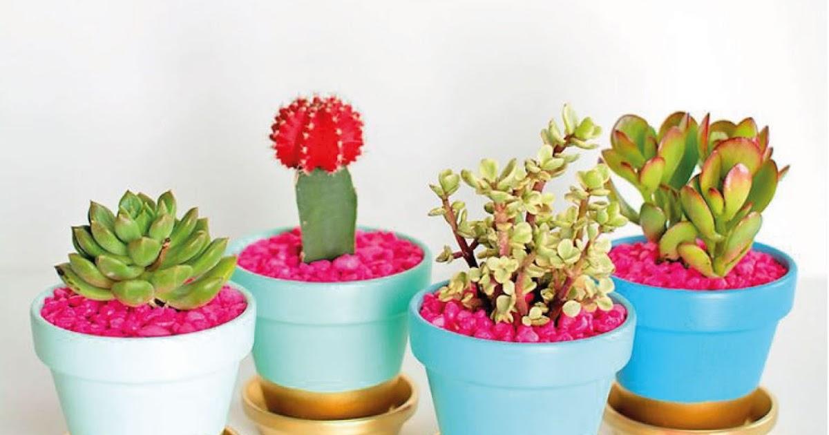 Cactus o suculentas diferencias saperes - Plantas que aguantan temperaturas extremas ...