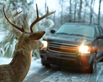 Deer Season Driving Tips