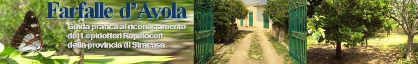 le Farfalle.info - Farfalle d'Avola