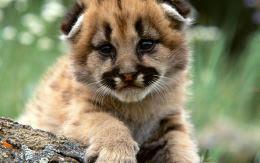 Львенок в джунглях