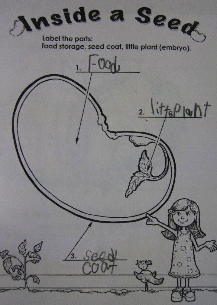 Kindergarten SuperKids: Plants! (& freebies!)